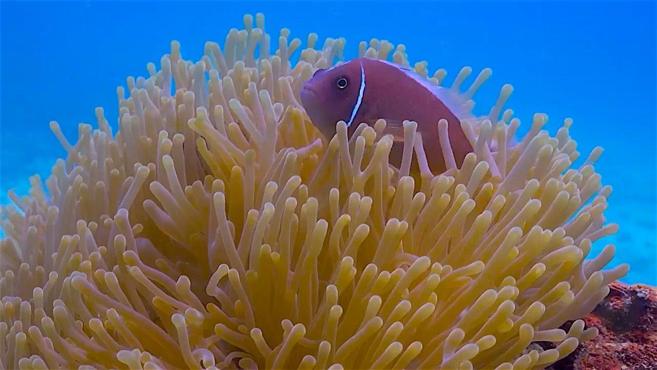 www.thefunkyturtle.com koh nang yuan marine life