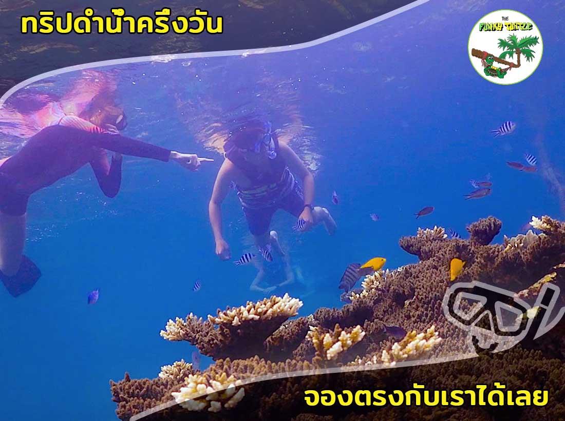 Best half day snorkel trips koh tao in Thailand