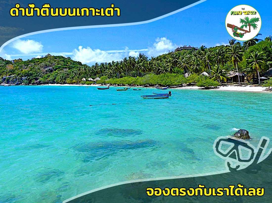 Beautiful Shark Bay Snorkeling Koh Tao